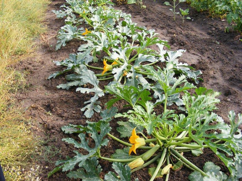 Wayland Flowers  Wikipedia