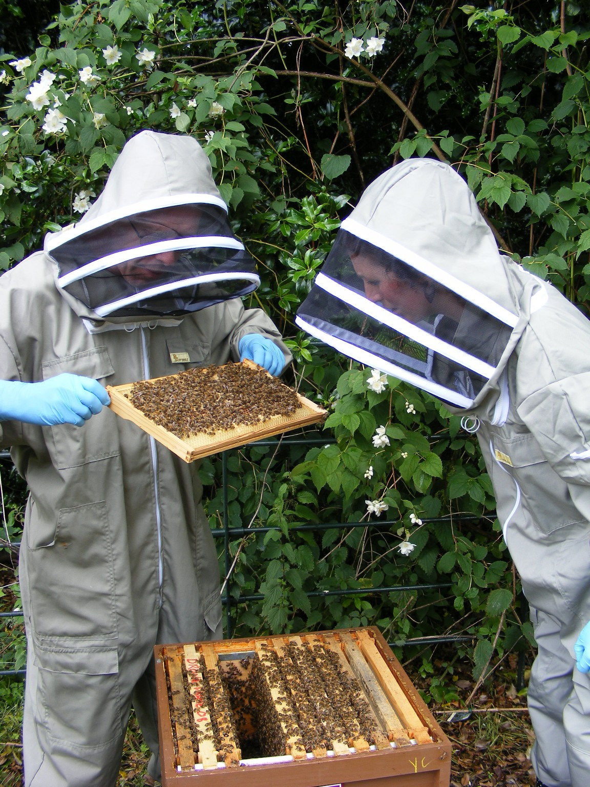 Beekeeping Course | Th...