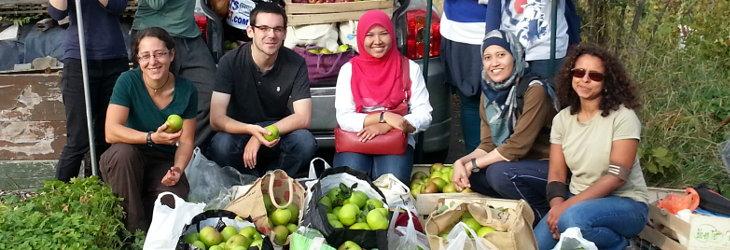 Abundance volunteers collecting the apple harvest