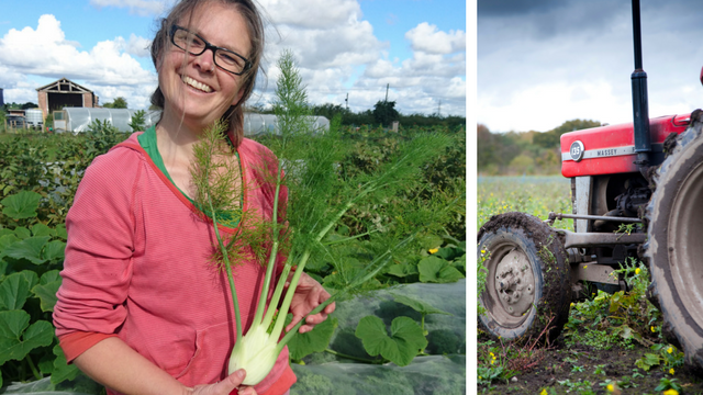 Helen in a field harvesting fennel