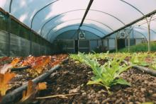Image of Woodbank Polytunnel #4